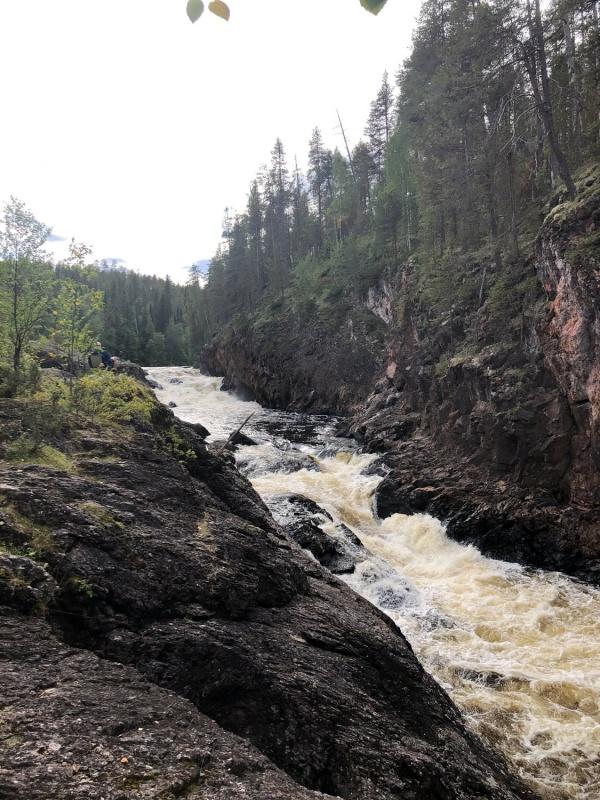 Kiutaköngäs krāces (ūdenskritumu) savā laikā bija noskatījuši elektrības iegūšanas industrijas pārstāvji, bet dabas draugiem, to izdevās nosargāt 291244