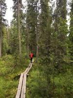 Kopā ar @suuntopulksteni.lv un @kidshike Travelnews.lv pieveic 102km populārākajā Somijas garo pārgājienu takā - Karhunkierros 31
