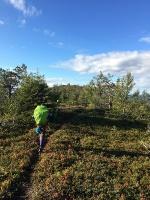 T;alum;a jau vīd takas augstākā punkta vecā Valkeaisenvaara ugunsdzēsēju meža vērotāju būdiņa. 51