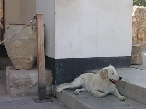 Katrs izmanto ēnainās vietas, lai veldzētos no karstās Krētas saules