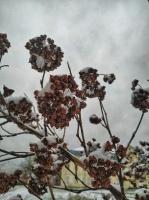 Krāslava  ietinas baltā sniega rotā. Foto: Inga Pudnika 6