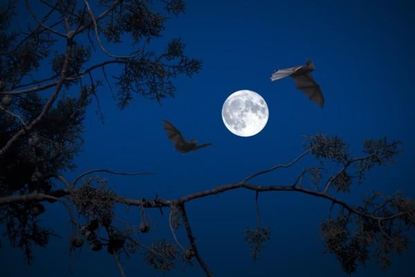 Ķemeru Nacionālajā parkā noris