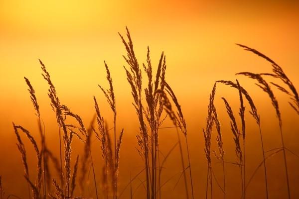 Talsos svinēs Baltu vienības dienu un rudens Sauls