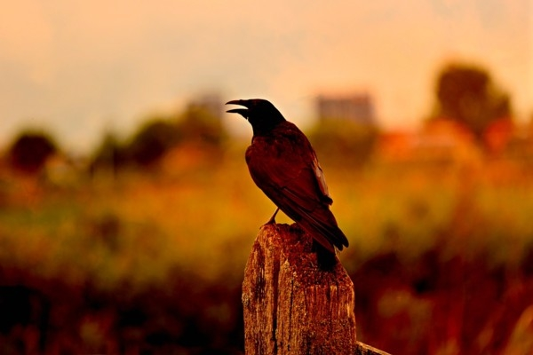 Carnikavā aicina uz putnu vērošanas pārgājienu