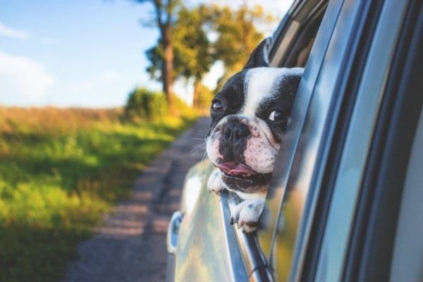 Uzzini, kā automašīnā pareizi pārvadāt mājdzīvniek