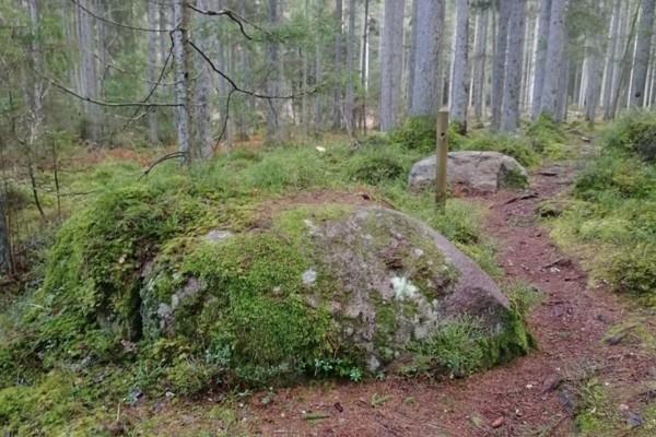 Kaltenes kalvu dabas taka top ceļotājiem pievilcīg