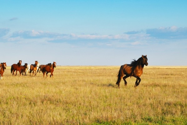 25. oktobris vēsturē: Tiek likti pamati Kazahstāna
