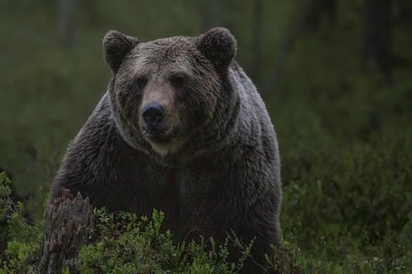Lāču sirojumi turpinās, īstenos nākamo metodi – lā