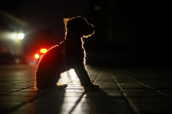 Stingrā mājsēde: Pašapliecinājums, suņa pastaiga u